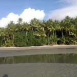 Palm trees - Cape Tribulation