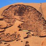 """Gehirn"" auf dem Uluru"