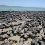 Stromatolites - Shark Bay, WA