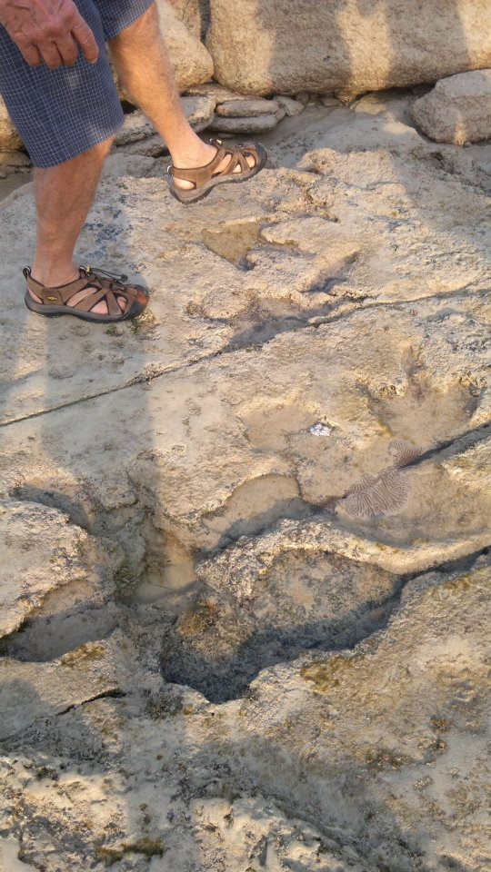 Dinosaur Footprints Broome