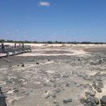 Stromatolites - Hamelin Pool
