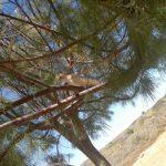 Schutz im einzigen Baum weit und breit im Cape Range Park