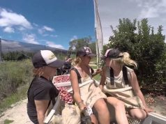 Fruit Picking Jobs Australia